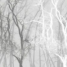 Valokuvatapetti - Wander Trees Charcoal