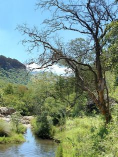 Campsites in belfast Mpumalanga. Renowned for its excellent trout fishing conditions. Come and find a campsite SA Campsites Trout Fishing, Nature Reserve, Belfast, Campsite, South Africa, River, Road Trips, Outdoor, Outdoors