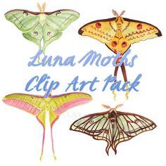 Luna Moth - Moon Moth Clip Art Watercolor Digital Download