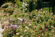 Peggy Rockefeller Rose Garden | NYBG