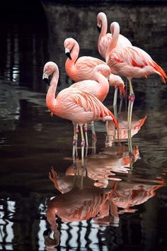 Best 11 Cheap painting bed, Buy Quality print tights directly from China printed maxi Suppliers: Oil Painting Abstract Red Tree Forest River Moder – SkillOfKing. Foto Flamingo, Flamingo Beach, Flamingo Art, Pink Flamingos, Pretty Birds, Beautiful Birds, Animals Beautiful, Cute Animals, Flamingo Wallpaper