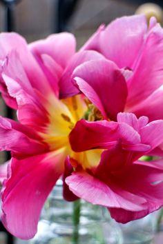 Galleri modern: Orangeri i galleri modern. tulipaner i mit orangeri - smukt