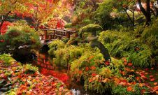Leaves begin to fall - Butchart Gardens, Vancouver Island, Brisitish Columbia, Canada