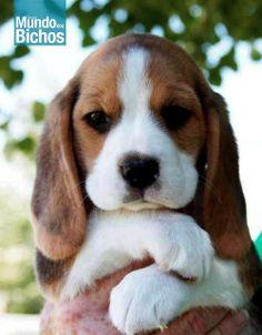 Projeto de Lei que proíbe testes em animais é aprovado em SP. https://www.facebook.com/photo.php?fbid=494161280703414&set=a.236610583125153.51183.221933667926178&type=1&theater