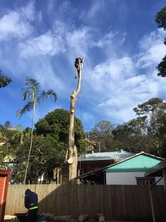 Tree removal can be achieved through different techniques depending on the size and species of the tree, its environment and location. The two major techniques used for cutting down a tree are the felling and lopping or sectional felling techniques. For more information about Tree Removal Cutting Sydney you can call us in 0439413 375.