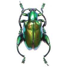 Afbeeldingsresultaat voor insecten