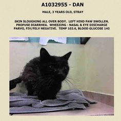 TO BE DESTROYED 4/16/15 *NYC*  Sweet Kitty in need of some extra TLC!! * Brooklyn Center * When he arrived, he was covered in dried diarrhea and fleas. He has an abscess on one of his paws and he also has some hair loss. He had a fever when he arrived, but it has now dropped. He is very friendly!  Help this poor guy out! *   My name is DAN. ID # A1032955. I am a male black dom mh mix. I am about 12 YEARS old.  I came in as a STRAY on 04/12/2015 from NY 11204