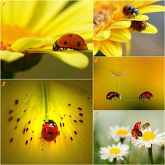 ladybug pictures | Ania Archer, Ladybuggs, Charmed by, Ladybugs Photographs,