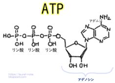 Atp Biology, Biology Lessons, Math Equations, Quotes, Health, Anime, Qoutes, Salud, Ap Biology