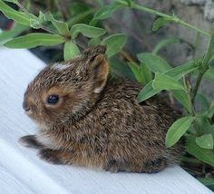 Cute baby bunny... Do you also think so ?