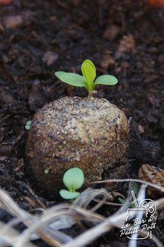 Fabriquer des bombes de graines à semer partout en ville : FLOWER POWEEEER! :)