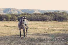 Horse in the veld Horses, Animals, Animales, Animaux, Horse, Animal, Animais, Dieren
