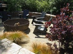 The tired lawn was replaced with decomposed granite (DG) in this Kentfield, CA garden.  I created a setting for a fire pit and chairs made of recycled plastic and plants for color and contrast.
