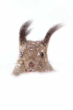 Portrait in a snowstorm Photo by Osamu Asami — National Geographic Your Shot