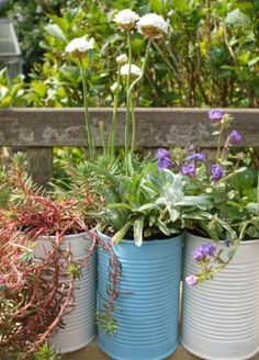how to upcycle tin cans as plant pots in the garden garden-hints-tips-idea-tools-projects