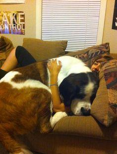 BIG puppy
