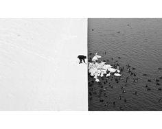 """Nikon Photo Contest 2013 - Cisnes en la nieve              Marcin Ryczek es el autor de esta imagen captada en Cracovia y titulada """"Un hombre dando de comer a cisnes en la nieve"""", que obtuvo un segundo premio. La composición con blancos y negros de la escena es espectacular."""