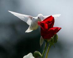 Rare Albino Hummingbird