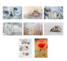 8 cartes postales nature fleurs et animaux de colores de la naturaleza sur DaWanda.com