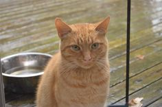 Found Cat - Unknown - Belwood, ON, Canada N0B 1J0 on August 01, 2014 (13:00 PM)
