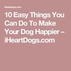 10 Easy Things You Can Do To Make Your Dog Happier – iHeartDogs.com