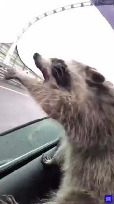 Funny Animal Videos, Funny Animal Memes, Funny Animal Pictures, Cute Little Animals, Cute Funny Animals, Funny Cute, Crazy Funny, Hilarious, Funny Dog Videos