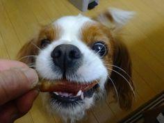その顔は反則。(^^♪ - 犬のいる生活