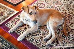 Nikka :: dogscapes.com san diego modern dog photography