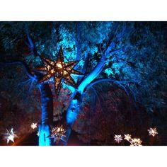 En este árbol nacen las estrellas...
