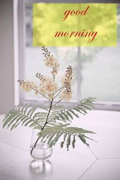 Good Morning Cards for Media with Fern and Flower