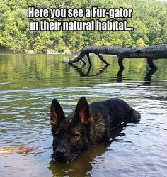 Be careful out there…(via The German Shepherd Dog Community)