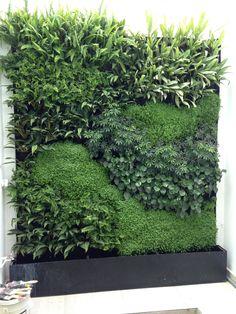 Muro verde jardin vertical living wall green wall