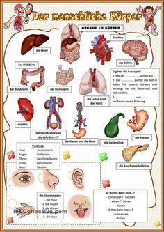 The human body learn German 2019 - DE . German Grammar, German Words, Learn Russian, Learn German, Deutsch A2, German Resources, Study German, Deutsch Language, Languages Online