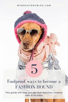 Learn foolproof ways to become a fashion hound. Cute Dog Collars, Dog Mom Gifts, Dog Costumes, Puppy Pictures, Dog Portraits, Dog Accessories, Dog Care, Dog Grooming, Fur Babies