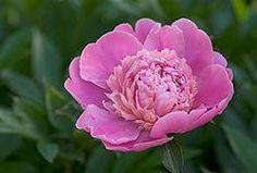 beginner gardening- annuals