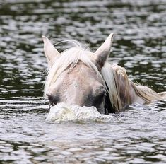 Acting Like Animals: Up, Periscope! All The Pretty Horses, Beautiful Horses, Animals Beautiful, Like Animals, Cute Baby Animals, Funny Animals, Horse Pictures, Animal Pictures, Zebras