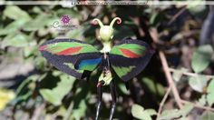 Alas de hada varón Insects, Plants, Animals, Fairy Wings, Butterfly Wings, How To Make, Tutorials, Animais, Animales