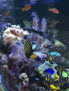 BLOG Beitrag Meerwasserfische krank, was kannst du tun?
