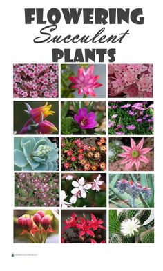 Plants - succulent plants with flowers Flowering Succulent Plants.not just interesting plants, gorgeous blooms too! Types Of Succulents Plants, Blooming Succulents, Flowering Succulents, Identifying Succulents, Kalanchoe Flowers, Succulent Gardening, Planting Succulents, Planting Flowers, Succulent Plants