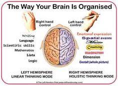 A forma como o cérebro está organizado. Os dois lados da sua estrutura: hemisfério direito (parte linear dos nossos pensamentos - lógica, linguagem..) e hémisfério esquerdo (parte holística: imaginação, emoções..).