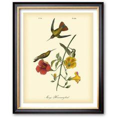 Art.com ''Mango Hummingbird'' Framed Art Print by John James Audubon,... ($140) ❤ liked on Polyvore featuring home, home decor, wall art, coventry black, black home decor, black framed wall art, vertical wall art, black wall art and wooden wall art