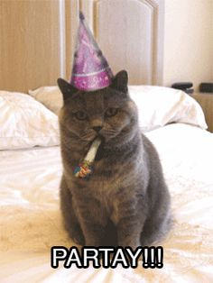 Find GIFs with the latest and newest hashtags! Search, discover and share your favorite Happy Birthday GIFs. The best GIFs are on GIPHY. Happy Birthday Animals Funny, Cat Birthday Memes, Singing Happy Birthday, Animal Birthday, Birthday Wishes, Happy Birthday Cat Images, Funny Happy Birthday Gif, 21 Birthday, Cake Birthday