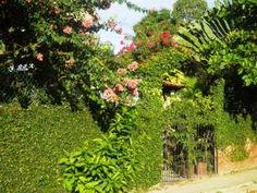 Garden gate on property in Lo De Marcos, Puerto Vallarta, Mexico – Best Places In The World To Retire – International Living-One of the main areas of Puerto Vallarta is Punta De Mita, which is located at the far northwest tip of the bay of Puerto Vallarta. It is very famous and it has the nicest hotels such as Four Seasons and St. Regis. Punta Mita is divided into two sections.