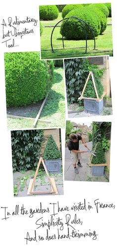 Boxwood trimming, hand is best according to Mrs. Description from muchpics.com. I searched for this on bing.com/images