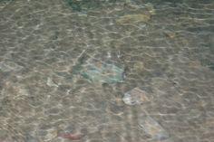 The Flooded Cave Floor 2 New Zealand, Cave, Floor, Dreams, Pavement, Caves, Floors, Flooring