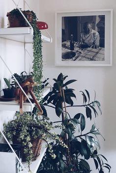 Urban Jungle Bloggers: Jungle Animals by @irbtt