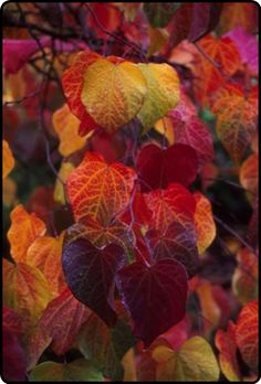 the beautiful colors of autumn…
