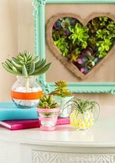 Succulents are poster children for sophisticated, unfussy style, making them ideal for dorm rooms!
