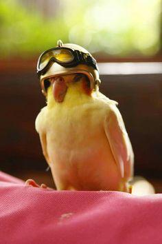 Ace pilot Captain Goldie.