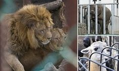 Emergency Food Fund for Ukraine Zoo on GoFundMe - $2,211 raised by 64 people in 2 days.